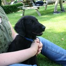 puppycursus05