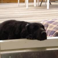 Honden 2009 (15)