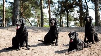 Permalink naar:Onze honden